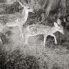 Dancing Deer Meadow