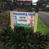 No frills cabins on Macadamia farm