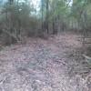 Piney Woods Camp