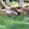 Goatfarm Annex