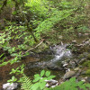 Rainforest Aquaponics
