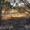 Antelope Run Van Camping Site