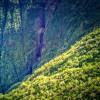 Tropical Rainforest in Hawaii Camp