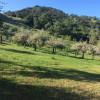 Stellar Oaks