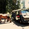 Short Bus at Corbett Farm