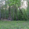 In da Pines
