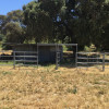 Stallion Oaks Ranch - Horse Corrals