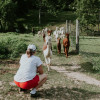 Camping with the Alpaca