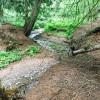 Wolverine Woods: Streamside Camping