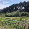 Wavelength Farm - Garden site