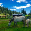 Spokane's Western Draft Horse Ranch