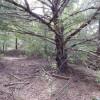 Cedar Canyon Lake PrimitiveZone