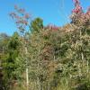 Spring fed brook in the Adirondacks