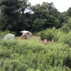 Berry Patch Camp Sites-2, 3, 4