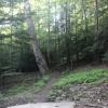 Backwood Camping