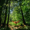 Forested Tent Sites