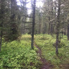 Bear Mountain Retreat - Tent Sites