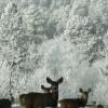 Bear Mountain DGC & Forest Preserve