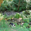 Powder Creek Ranch Campsite #2