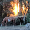 Horse Lovers Paradise - Tent/RV