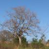 Murchison Farm's Wildlife Event