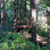 REDWOODS+WINE COUNTRY+ESCAPE