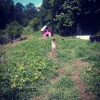 Cheshire herbal farm and sanctuary