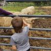 Horse and Farm Animal Petting Farm