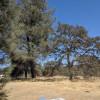 Pineapple Ranch