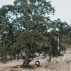 Tree Swing Campsite - GRPF #5