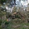 Goat House Farm Hurricane Recovery