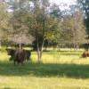 MOLIZ Freedom Dude Ranch