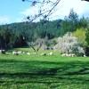 Pachamam Farm Breakfas & Farm tour