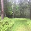 Fern Grove Campsite