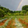 Off grid hippie farm experience