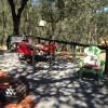 Campsite Party Deck