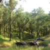 Ghost Pine: campsite 1