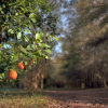 WonderField Farm & Grove
