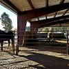 Guest Horses at Plenty Star Ranch
