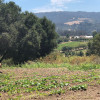 Farm Discovery Permaculture Garden