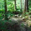 Olympic Rainforest camping retreat
