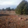 ∆ Big Sky Retreat: Site Pronghorn