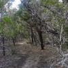 Whitetail Trail