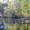 The Homosassa Preserve
