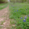 Enchanted Bluebonnet Terraces
