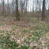 Wild Onion Acres Primitive Camp