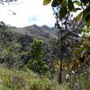 Campsite: Los Pinos