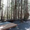 Olympic Rainforest retreat camp 4b