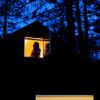 Modern Cabin under Pine Forest