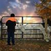 Alpaca Ranch with Beautiful Views